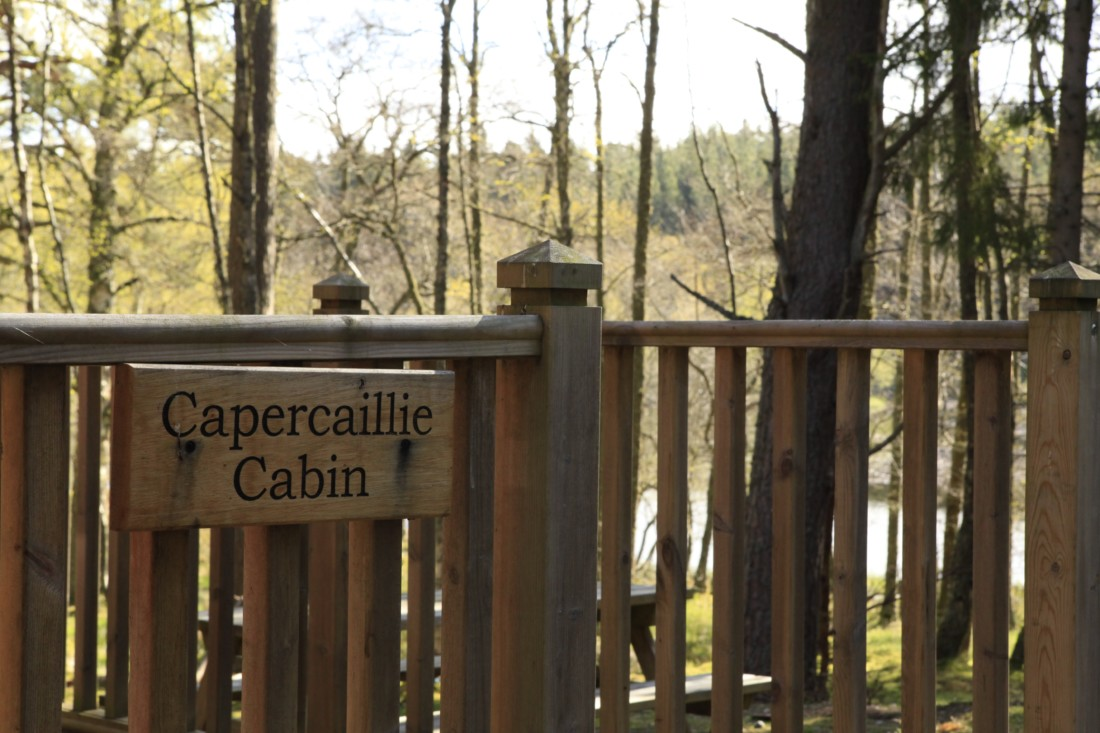 capercaillie-gallery1